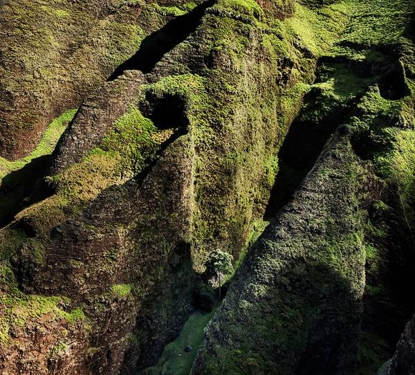 A Tree Grows In Kalalau Photography Art | Ed Sancious - Stillness In Change