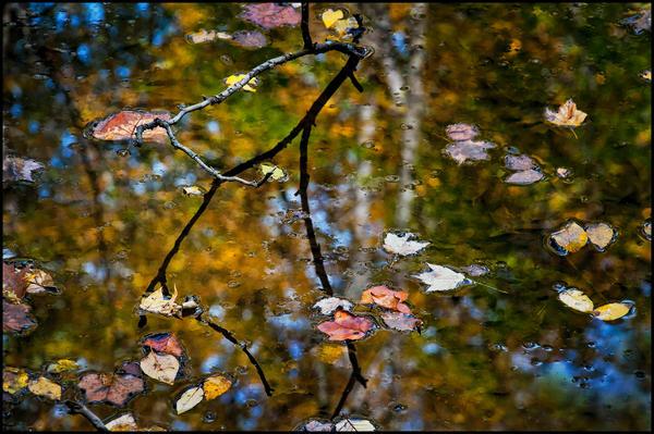Autumnal Farewell Photography Art | Ed Sancious - Stillness In Change