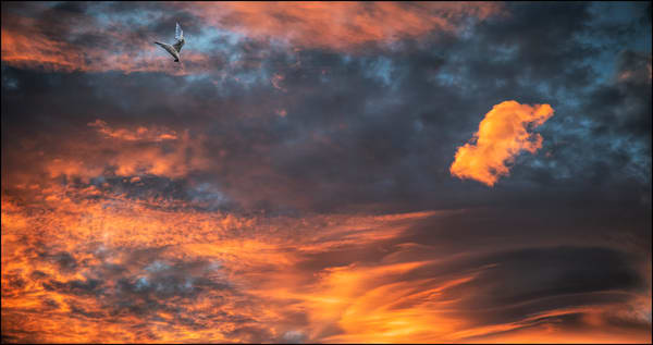 Backyard Sunset 43 Photography Art   Ed Sancious - Stillness In Change