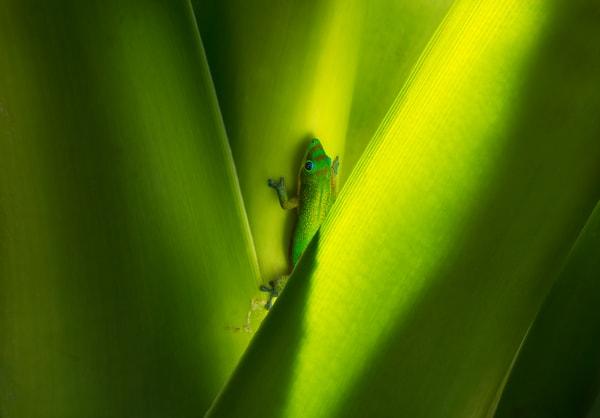 Emerald Habitat Photography Art   Ed Sancious - Stillness In Change