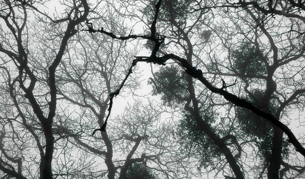 Garden Wraiths Fog And Shadows Photography Art | Ed Sancious - Stillness In Change