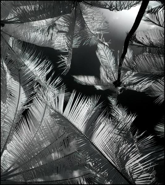 Halawa Arboreals Photography Art | Ed Sancious - Stillness In Change