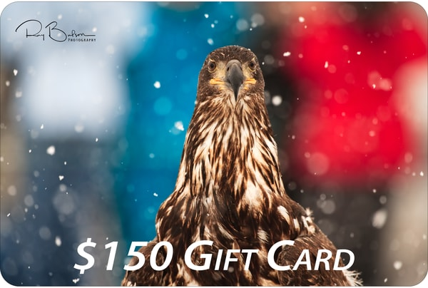$150 Gift Card | Ray Bulson Photography