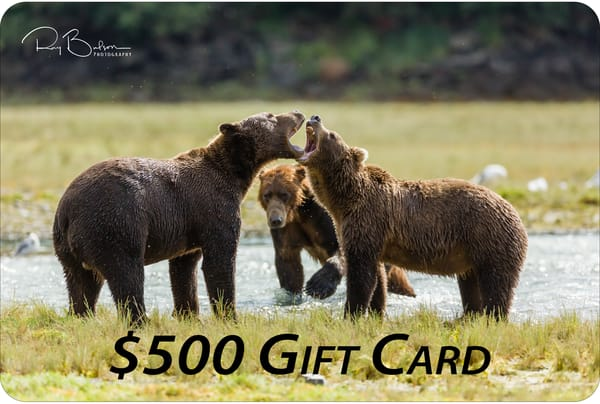 $500 Gift Card | Ray Bulson Photography