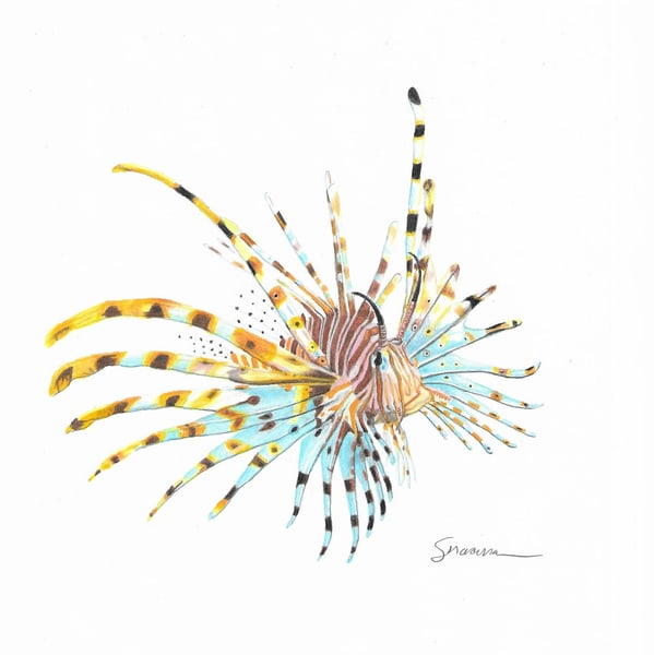 Lion Fish Original Drawing Art | juliesiracusa
