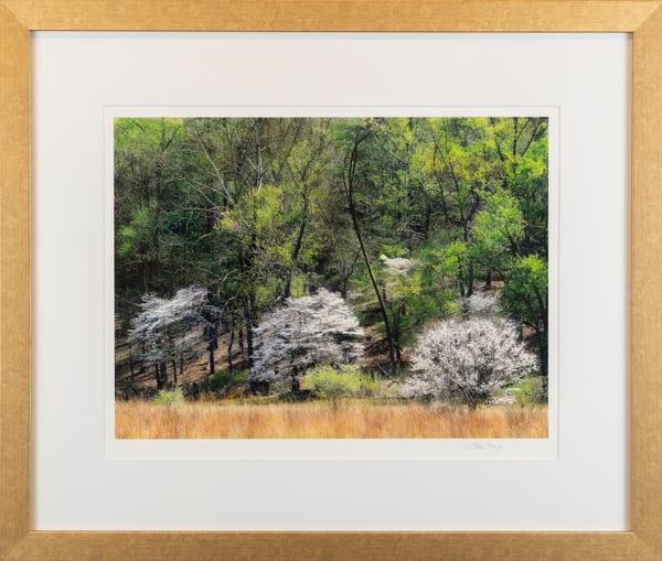 white, dogwood, flowering, in bloom, green, Smokey Mountains, spring,