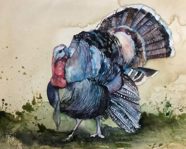 Original Wildlife Turkey Painting Art | Christy! Studios