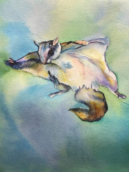 Original Wildlife Flying Squirrel Painting Art | Christy! Studios
