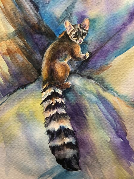 Original Wildlife Ringtail Cat Painting Art | Christy! Studios