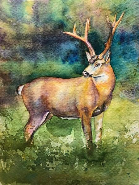 Original Wildlife Black Tail Deer Painting Art | Christy! Studios