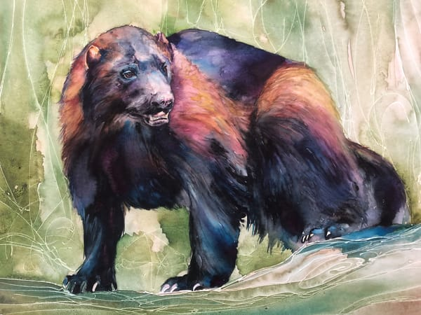 Original Wildlife Wolverine Watercolor Painting Art | Christy! Studios