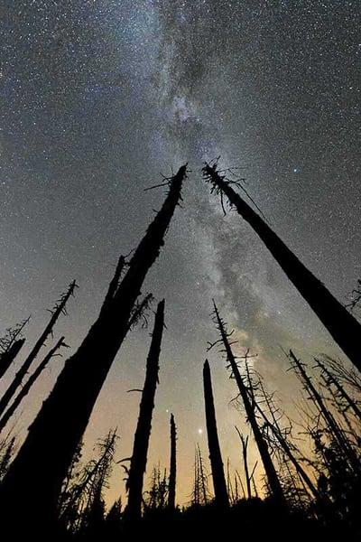 Milky Way Tree Silhouette