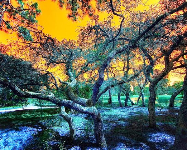 Botanical Rainbow Tree Photography Art | Mark Stall IMAGES