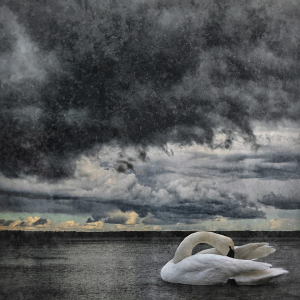 Swan Lake II, by Jeremy Simonson