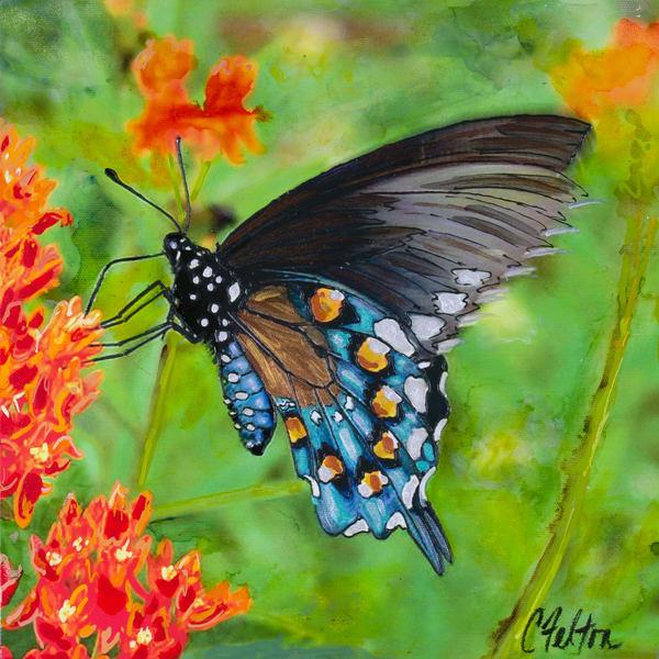 Swallowtail | Channe Felton Fine Art