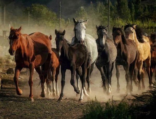 Horse Community Art   Danny Johananoff