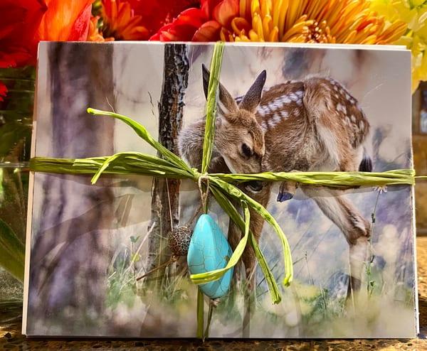 Bend's Wild Treasures Card Set | offleashphotography