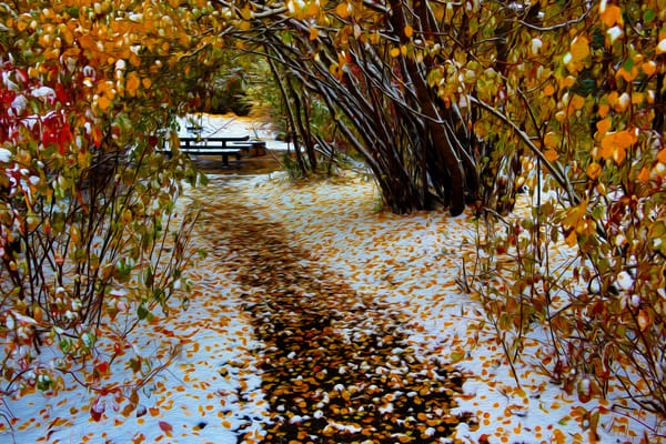 The Walk Art | Oz Fine Art Studio