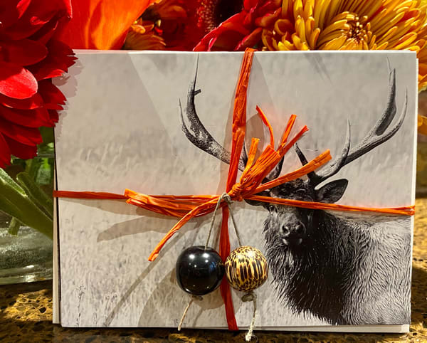 Bison, Elk, Bighorn, Moose Card Set | offleashphotography