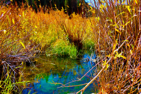 In The Reeds Art | Oz Fine Art Studio