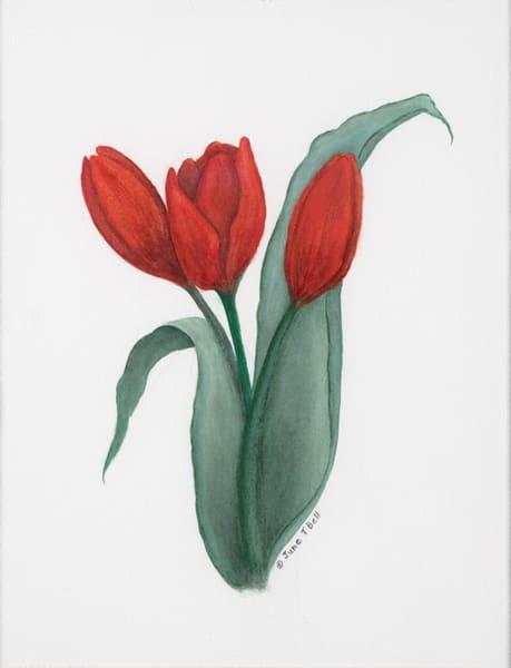 Scarlet Tulip Trio  |  June Bell Artist