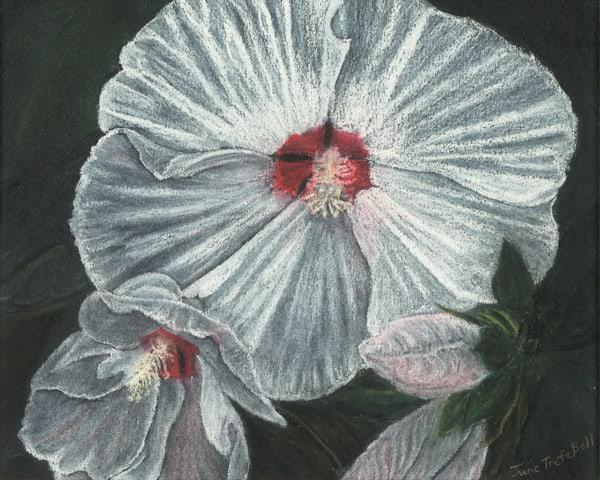 Marblehead Hibiscus  |  June Bell Artist