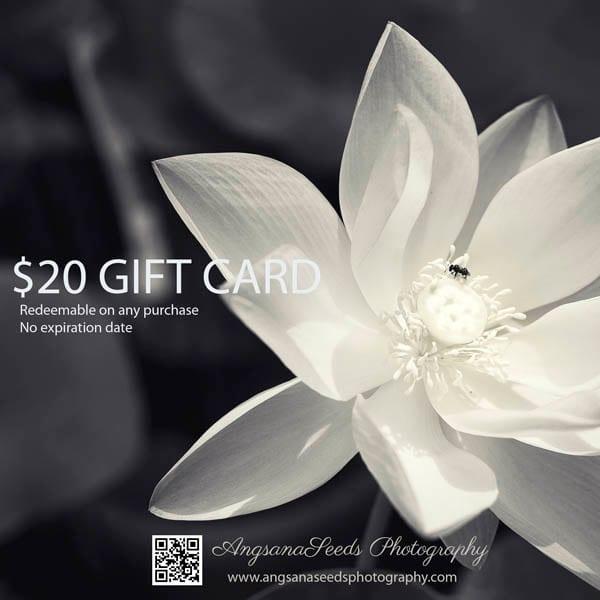 $20 Gift Card | AngsanaSeeds Photography