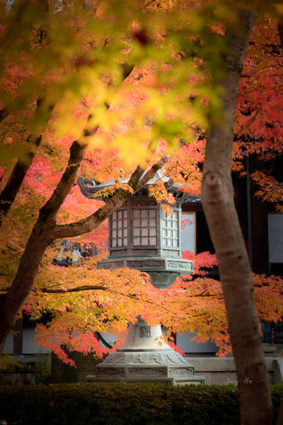 Fine art photograph of a Japanese Shinto shrine stone lantern shrouded by the autumn leaves by Ivy Ho.