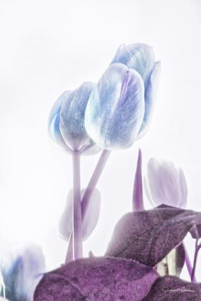 violet, light, inside, reveal, spiritual, feel, jackierobbinsstudio, photographicprints, buyartonline