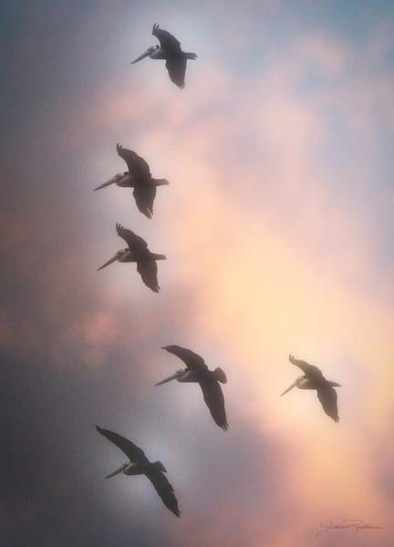 formation, brighterday, roundingthecorner, pelicans, freedom, jackierobbinsstudio, photographicprints, buyartonline