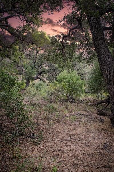 arms, nature, integrate, embrace, trees, oaks, landscape, sunrise, jackierobbinsstudio, photographicprints, buyartonline