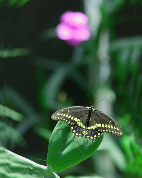 Black & Yellow Butterfly  Photography Art | It's Your World - Enjoy!