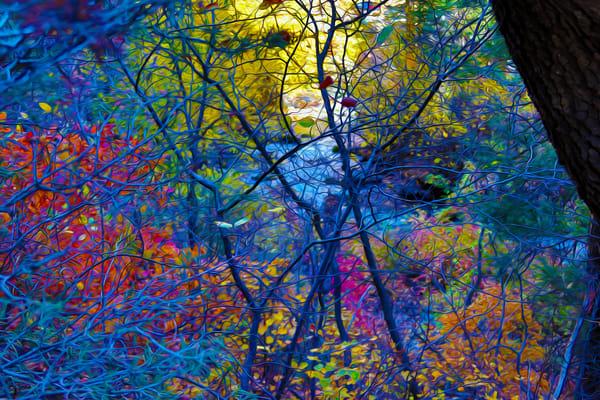 Forest Deep Art | Oz Fine Art Studio