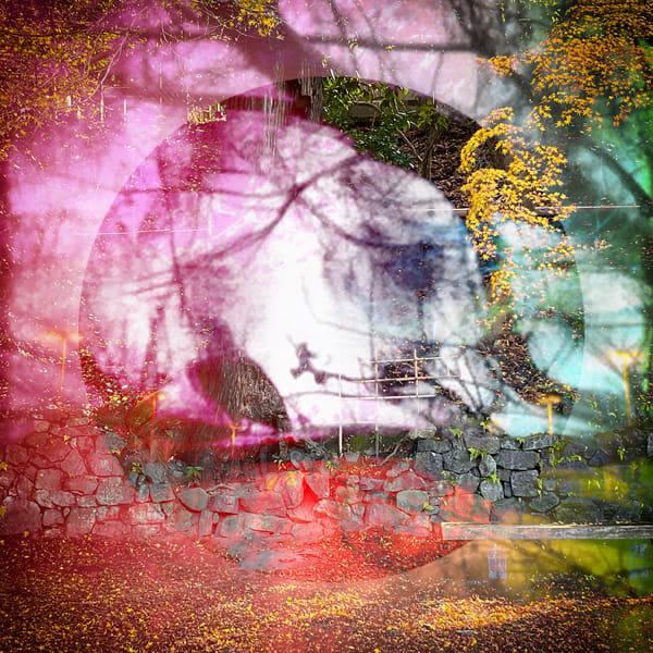 Park Bench And Dream Photography Art | Carol's Little World