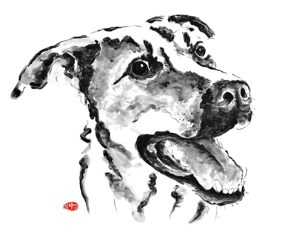 Scooby: German Sheherd Pittbull Mix Art | Youngi-Sumistyle pets