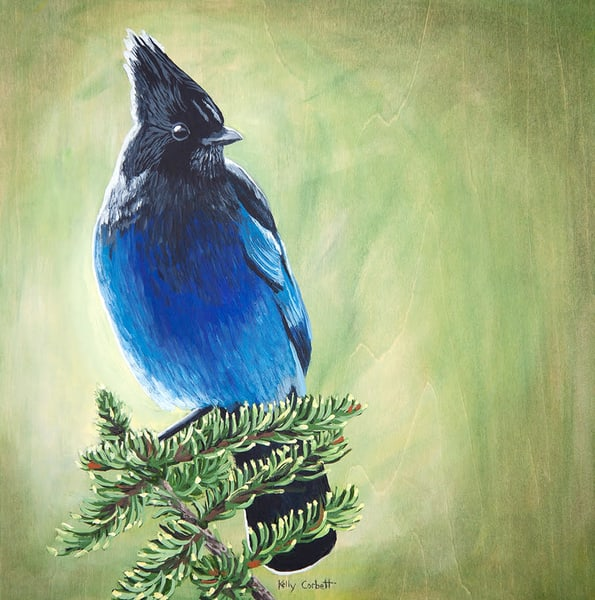 12x12 painting of a Steller's Jay
