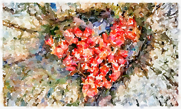 Red Heart Alchemy, heart, photo, watercolor