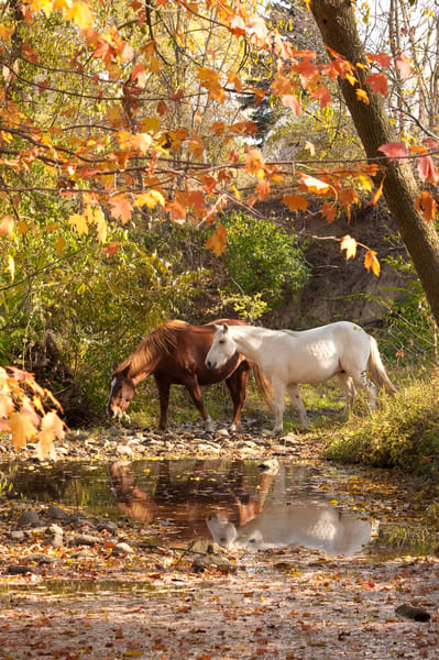Autumn Beauties Photography Art | Deb Little Photography