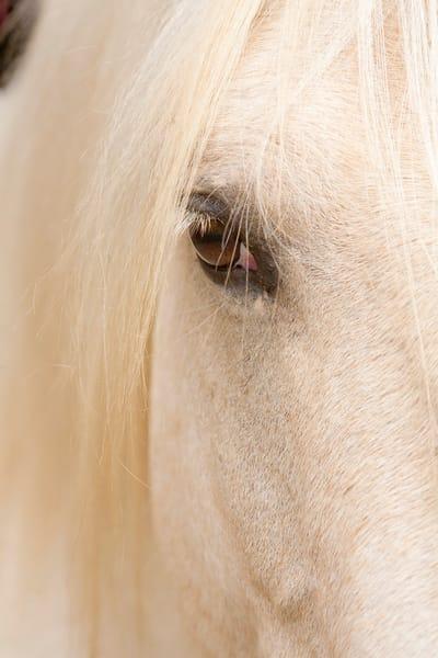 Blondie Photography Art | Deb Little Photography