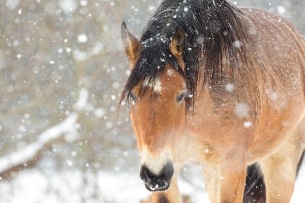 Winter Love Photography Art | Deb Little Photography