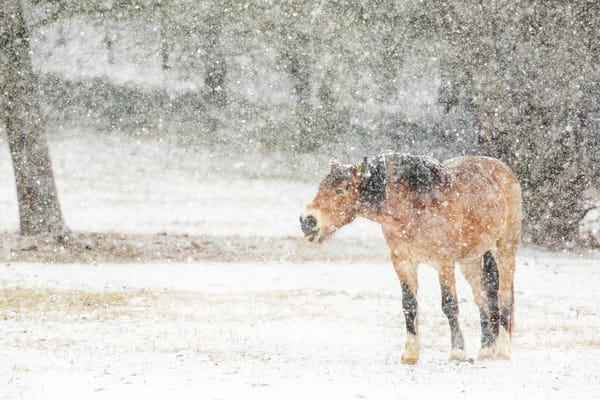 Catching Snowflakes Photography Art | Deb Little Photography