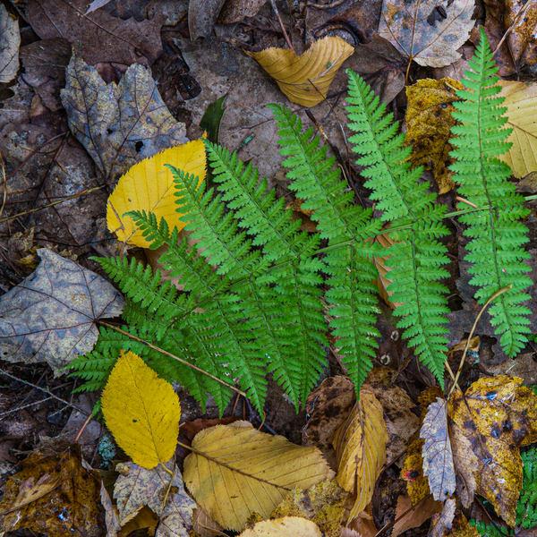 Autumn Carpet Photography Art | Kim Bova Photography