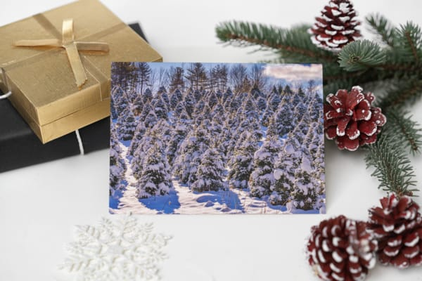 Snowy Pines Greeting Card | Shop Photography by Rick Berk