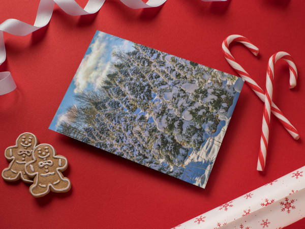 Snow Covered Pines Greeting Card | Shop Photography by Rick Berk
