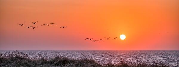 South Beach Bird Migration Art | Michael Blanchard Inspirational Photography - Crossroads Gallery
