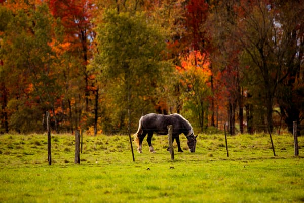 Grazing Horse Autumn Landscape