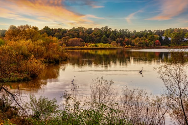 Birds Fishing In Autumn Photography Art | Grace Fine Art Photography by Beth Sheridan