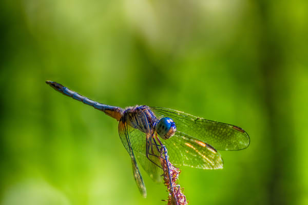 Dragonfly Photography Art | Beth Sheridan, Grace Fine Art Photography