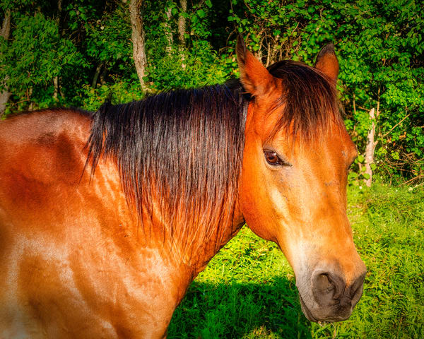 Horse In Pasture 2 Photography Art | Grace Fine Art Photography by Beth Sheridan