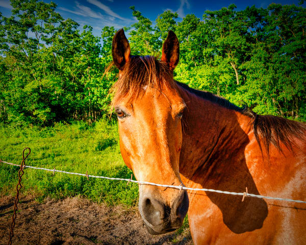 Horse In Pasture Photography Art | Grace Fine Art Photography by Beth Sheridan